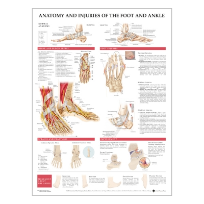 "Chart ""Anatomy & injuries of the foot & ankle"""