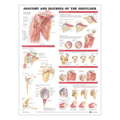 "Chart ""Anatomy & injuries of the shoulder"""