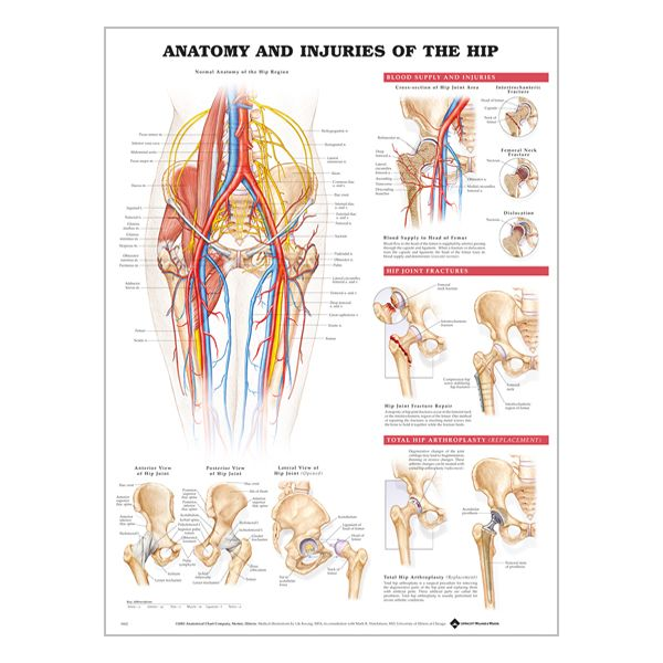 "Charte ""Anatomy & injuries of the hip"""